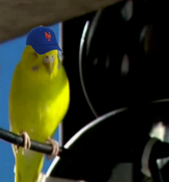 Mets Soar to Victory on Wings on Rally Parakeet