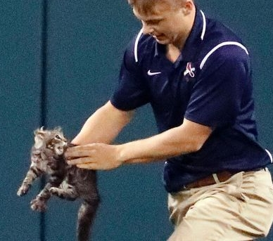 A Mysterious Rally Cat Leads Cardinals to Victory
